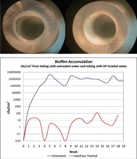 Figure 4. Biofilm develops over time on the luminal surface of polyurethane tubing as water flows through it (Left, top), but fails to form after passing through a HaloPure Br cartridge (Right, top). Concentrations of bacteria per sq. cm on the wall of an RO storage tank are much reduced, for extended periods, when there is a HaloPure cartridge upstream of the entering water (Bottom).