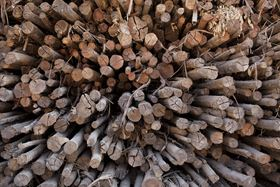 Veolia's technology will optimise the processing of wood-derived pulp used to make cellulose fibres.