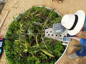 A top view of one of the BiomPod aerobic tanks showing the aquatic plants used including papyrus. (Image: Mrüna)