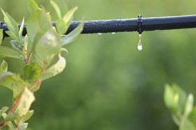Drip lines are considered to be the most effective method of watering crops.
