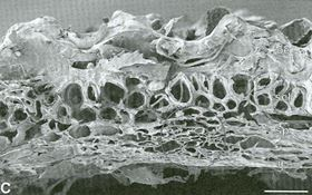 Fig 1: Close up image showing the porous structure of a rice